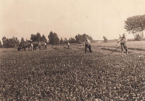 Campo di ladino - Archivio di Stato di Oristano prot. 732 del 21-07-2016