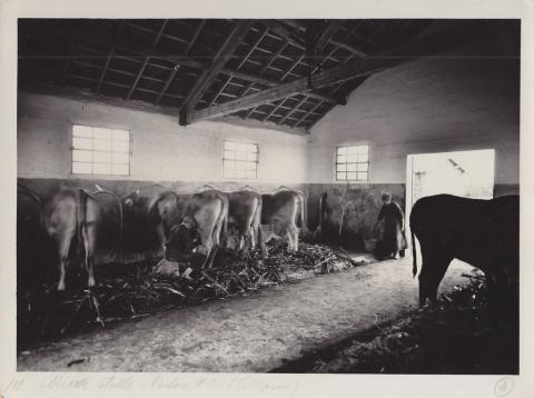 Stalla di una fattoria di Arborea - Archivio di Stato di Oristano prot. 732 del 21-07-2016