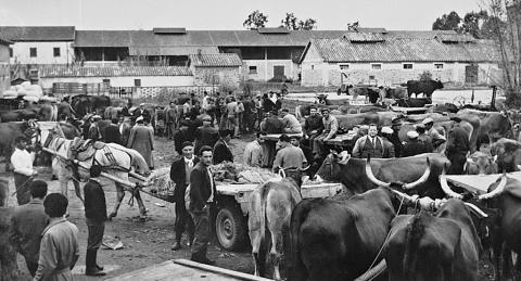 Mercato del Bestiame - Archivio di Stato di Oristano prot. 732 del 21-07-2016